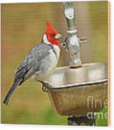 Red Crested Cardinal Wood Print