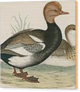 Red Crested Whistling Duck Wood Print