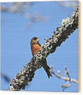 Red Crossbill Finch Wood Print