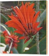Her Red Crown Wood Print