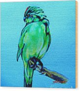 Red Crowned Parakeet Wood Print by Patricia Howitt