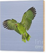 Red-crowned Parrot Wood Print