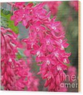 Red-flowering Currant Blossom Wood Print