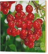Red Currants Ribes Rubrum Wood Print