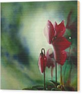 Red Cyclamen Wood Print