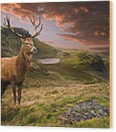 Red Deer Stag And Mopuntains Wood Print