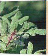 Red Dragon On Compound Leaf Wood Print
