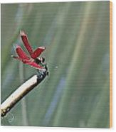 Red Dragonfly Wood Print