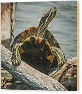 Red Eared Slider Turtle Wood Print