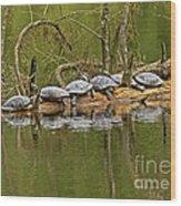 Red Eared Slider Turtles 2 Wood Print