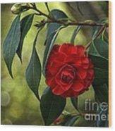 Red Elegance Wood Print
