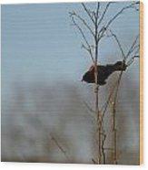 Red Epaulets Wood Print