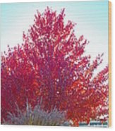 Red Explosion Wood Print