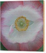 Red Eye Poppy Wood Print