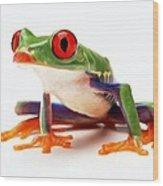 Red-eye Tree Frog 1 Wood Print
