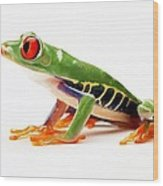 Red-eye Tree Frog 4 Wood Print