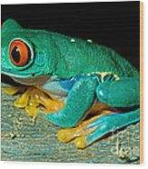 Red Eye Tree Frog Wood Print