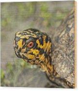 Red Eyed Alabama Box Turtle - Terrapene Carolina Wood Print
