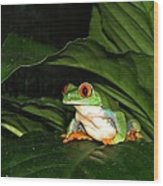 Red Eyed Green Tree Frog Wood Print