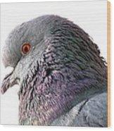 Red-eyed Pigeon Wood Print
