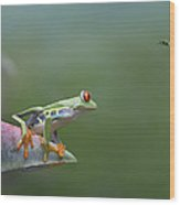 Red-eyed Tree Frog Eyeing Bee Fly Wood Print by Tim Fitzharris