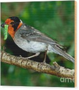 Red-faced Warbler With Caterpillar Wood Print