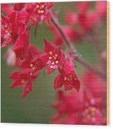 Red Fairy Trumpets Wood Print