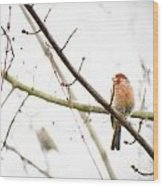 Red Finch In Snow Wood Print
