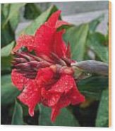 Red Flower After The Rain Wood Print