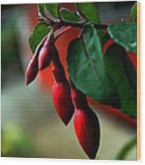 Red Flower Buds Wood Print