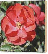 Red Flower I Wood Print