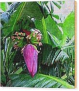 Red Flower Of A Banana Against Green Leaves Wood Print