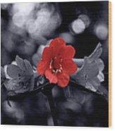 Red Flower Petals Wood Print