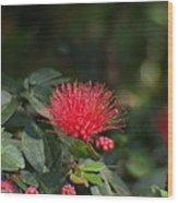 Red Flower Spraying Wood Print