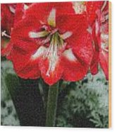 Red Flower With Starburst Wood Print