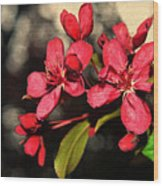 Red Flowering Crabapple Blossoms Wood Print
