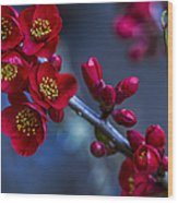 Red Flowering Quince Wood Print