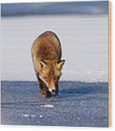 Red Fox Crossing A Frozen Lake Wood Print