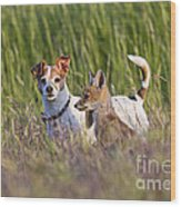 Red Fox Cub With Jack Russel Wood Print