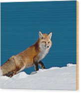 Red Fox Wood Print by Gary Beeler