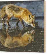 Red Fox Has A Drink Wood Print
