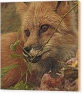 Red Fox In Autumn Leaves Stalking Prey Wood Print