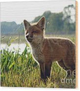 Red Fox Kit Wood Print