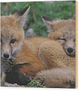 Red Fox Kit Stays Alert Wood Print