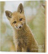 Red Fox Kit Up Close Wood Print