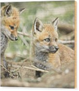 Red Fox Kits Wood Print