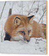Red Fox Making Dinner Plans Wood Print