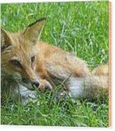 Red Fox Resting Wood Print