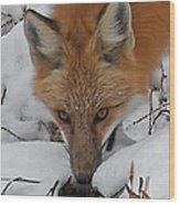 Red Fox Upclose Wood Print