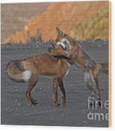 Red Foxes Wood Print